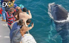 2 Hour Whale Watching Cruise Departing Augusta - 10% Off