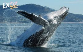Coffs Harbour Whale Watching Tour - 2 Hours - 10% Off