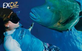 Great Barrier Reef Snorkel and Dive Cruise - 10% off
