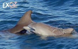 Jervis Bay Dolphin Watching Tour - 10% Off