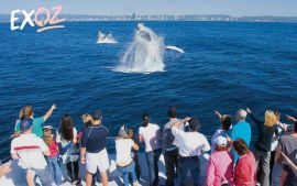 Sea World Whale Watching Cruise - 10% Off