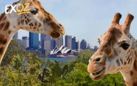Taronga Zoo & Ferry Pass with Sky Safari - 10% Off