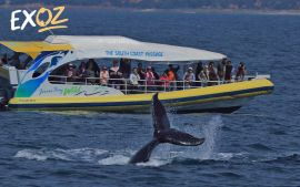 Whale Watching Jervis Bay - 10% Off